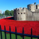 Red Poppy Installation at the Tower of London