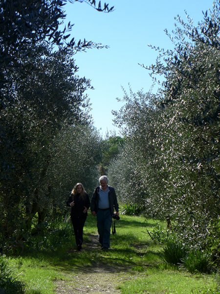 Walking along olive trees.